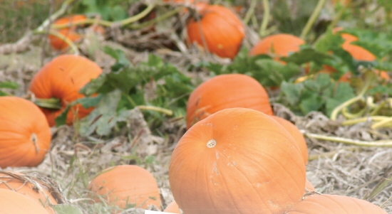 Wilson Living Magazine - Pumpkin Patch