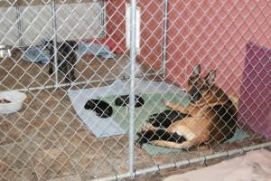 Dog shelter 2